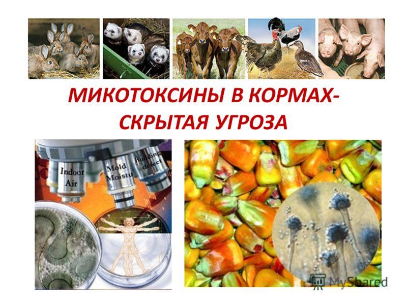 МИКОТОКСИНЫ В КОРМАХ- СКРЫТАЯ УГРОЗА