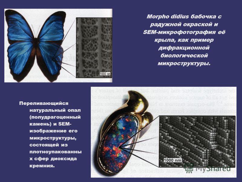 Morpho didius бабочка с радужной окраской и SEM-микрофотография её крыла, как пример дифракционной биологической микроструктуры. Переливающийся натуральный опал (полудрагоценный камень) и SEM- изображение его микроструктуры, состоящей из плотноупаков