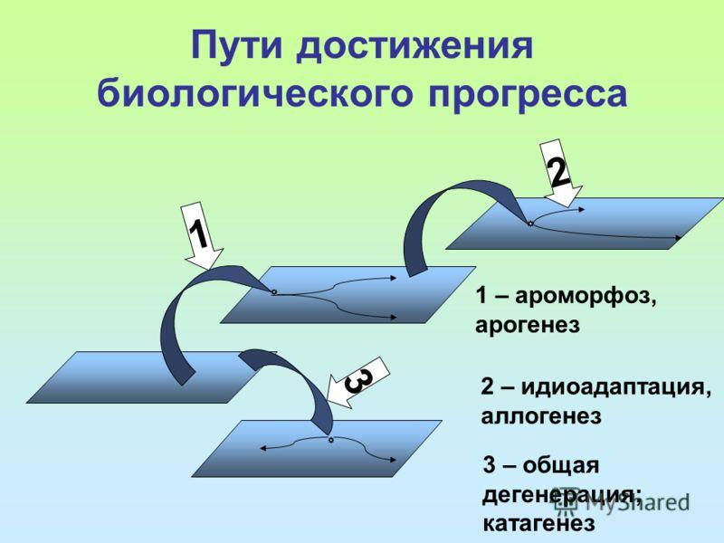 Пути достижения биологического прогресса 1 3 2 1 – ароморфоз, арогенез 2 – идиоадаптация, аллогенез 3 – общая дегенерация; катагенез
