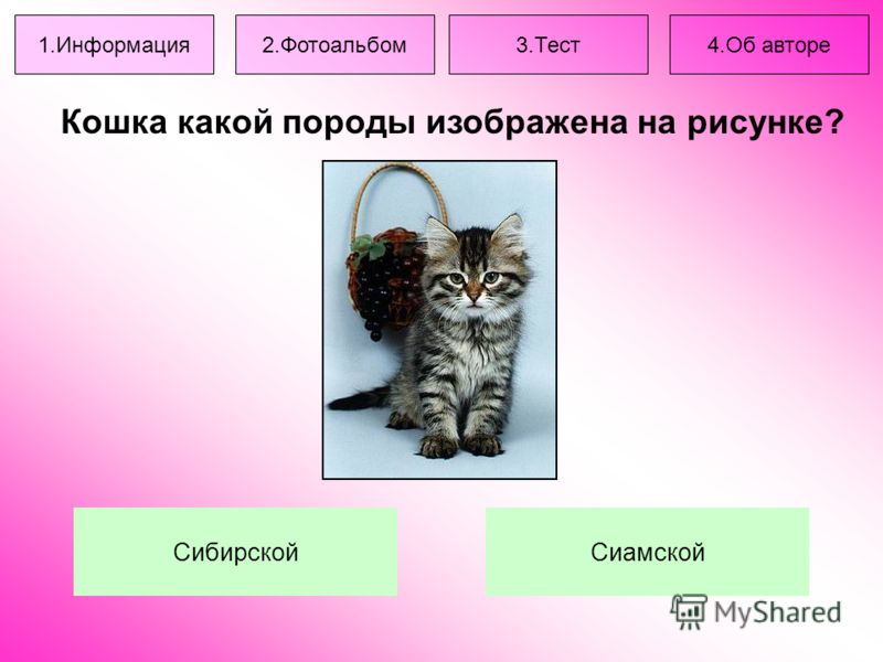 Кошка какой породы изображена на рисунке? СибирскойСиамской 1.Информация2.Фотоальбом3.Тест4.Об авторе