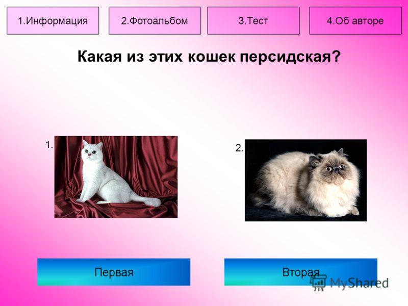 Какая из этих кошек персидская? ПерваяВторая 1. 2. 1.Информация2.Фотоальбом3.Тест4.Об авторе