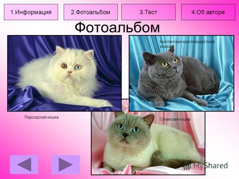 Фотоальбом Персидская кошка Британская короткошерстная кошка Сиамская кошка 1.Информация2.Фотоальбом3.Тест4.Об авторе
