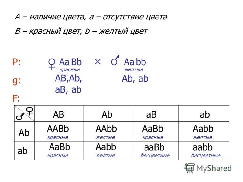 bb ВbАа A – наличие цвета, a – отсутствие цвета B – красный цвет, b – желтый цвет Р:AаAа g:g: АВ,Аb, аВ, аb Аb, аb АВАbАbаВ аb АbАb ААВbААbbАаВbАаbb АаВbАаbb ааВbааbb красные желтые бесцветные F:F: красныежелтые
