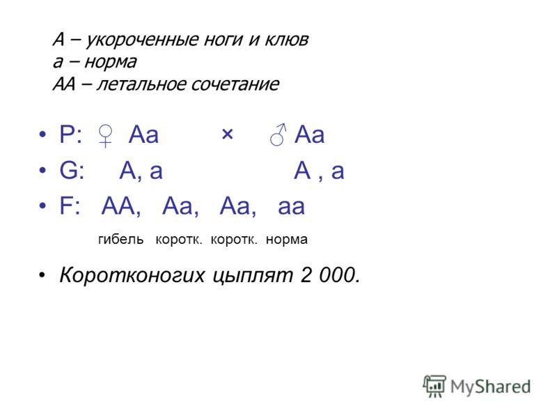 Р: Аа × Аа G: А, а А, а F: АА, Аа, Аа, аа гибель коротк. коротк. норма Коротконогих цыплят 2 000. А – укороченные ноги и клюв а – норма АА – летальное сочетание