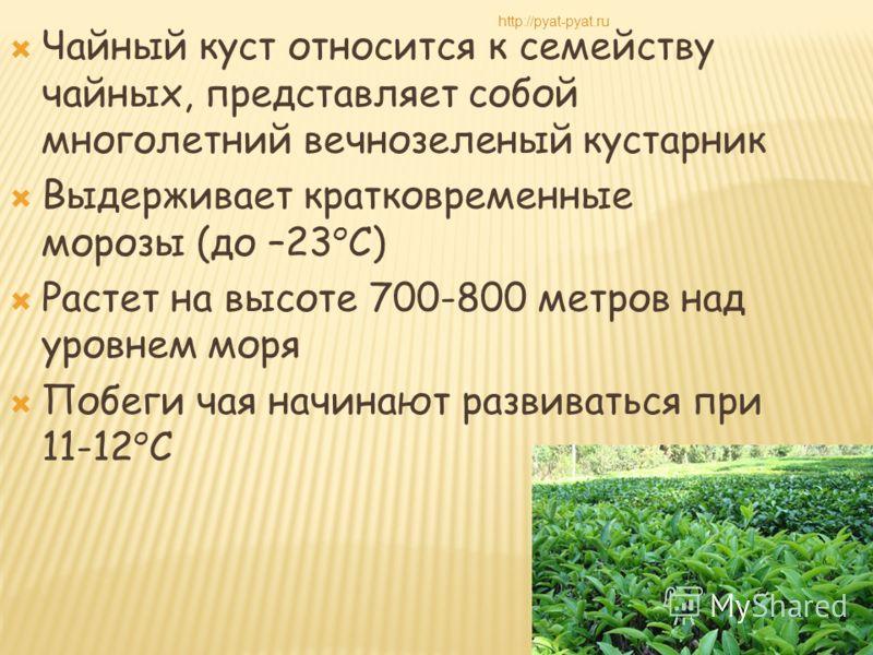 Чайный куст относится к семейству чайных, представляет собой многолетний вечнозеленый кустарник Выдерживает кратковременные морозы (до –23 о С) Растет на высоте 700-800 метров над уровнем моря Побеги чая начинают развиваться при 11-12 о С http://pyat