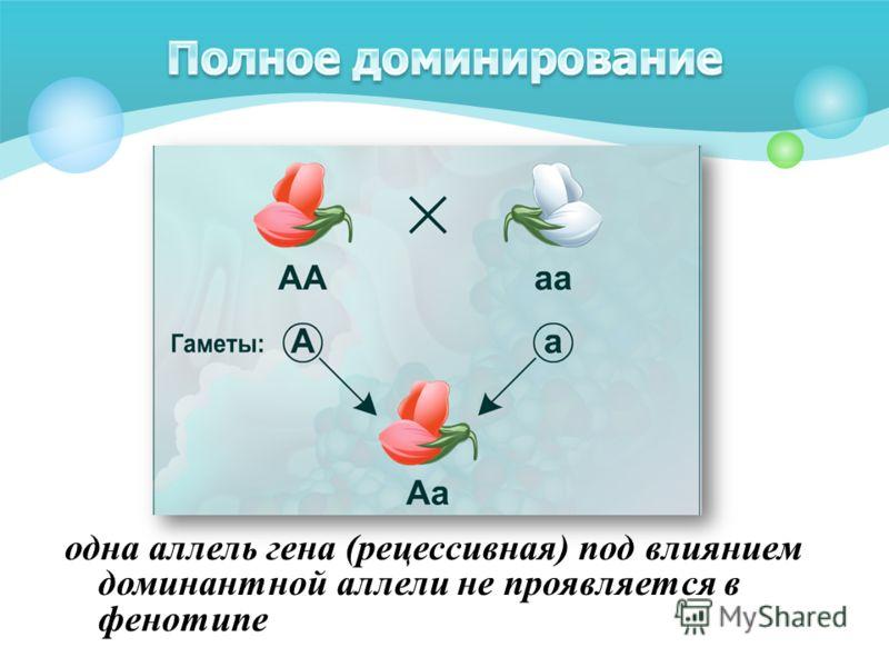 одна аллель гена (рецессивная) под влиянием доминантной аллели не проявляется в фенотипе
