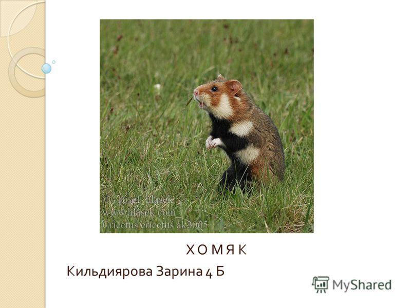 Х О М Я К Кильдиярова Зарина 4 Б