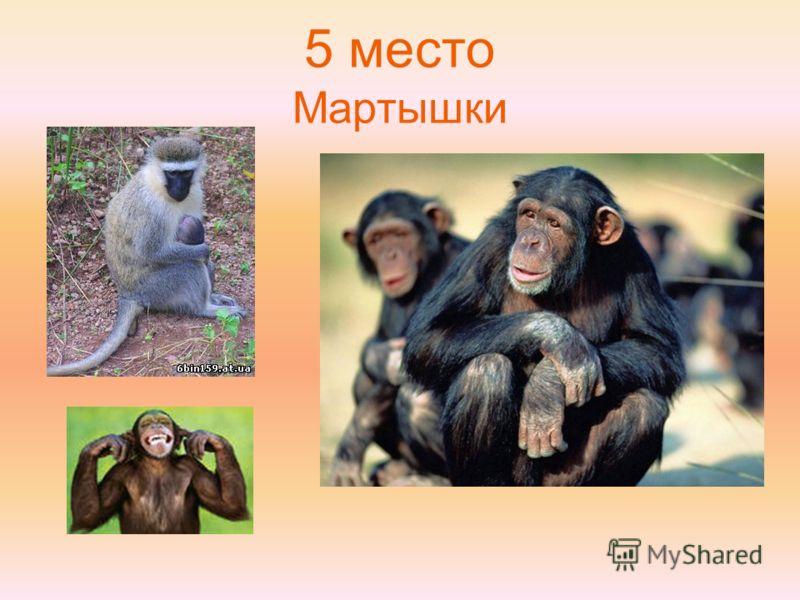 5 место Мартышки