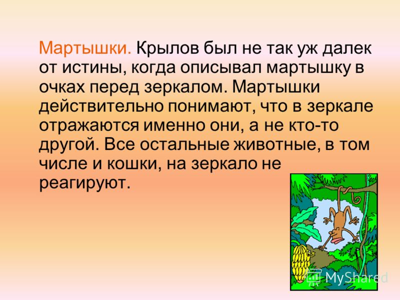 Мартышки. Крылов был не так уж далек от истины, когда описывал мартышку в очках перед зеркалом. Мартышки действительно понимают, что в зеркале отражаются именно они, а не кто-то другой. Все остальные животные, в том числе и кошки, на зеркало не реаги