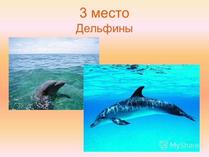 3 место Дельфины