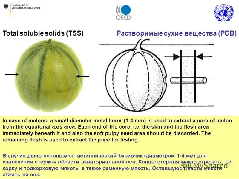 13 Total soluble solids (TSS) 13 In case of melons, a small diameter metal borer (1-4 mm) is used to extract a core of melon from the equatorial axis area. Each end of the core, i.e. the skin and the flesh area immediately beneath it and also the sof