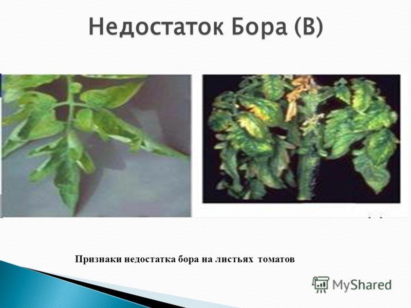 Недостаток Бора (В) Признаки недостатка бора на листьях томатов
