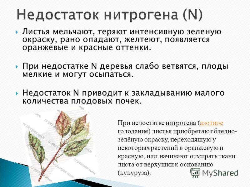 Листья мельчают, теряют интенсивную зеленую окраску, рано опадают, желтеют, появляется оранжевые и красные оттенки. При недостатке N деревья слабо ветвятся, плоды мелкие и могут осыпаться. Недостаток N приводит к закладыванию малого количества плодов