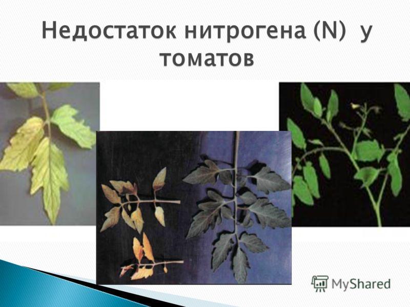 Недостаток нитрогена (N) у томатов