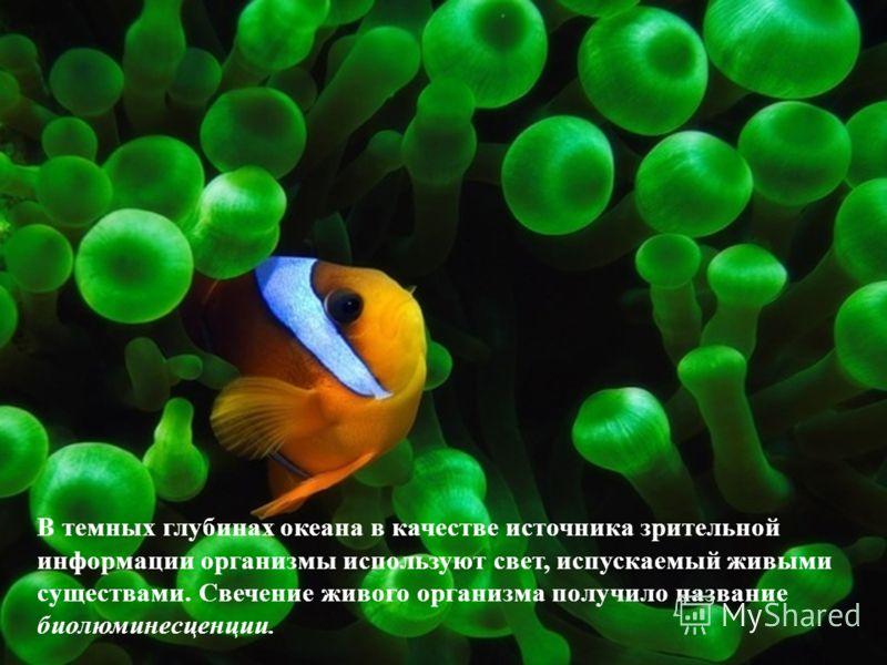 В темных глубинах океана в качестве источника зрительной информации организмы используют свет, испускаемый живыми существами. Свечение живого организма получило название биолюминесценции.