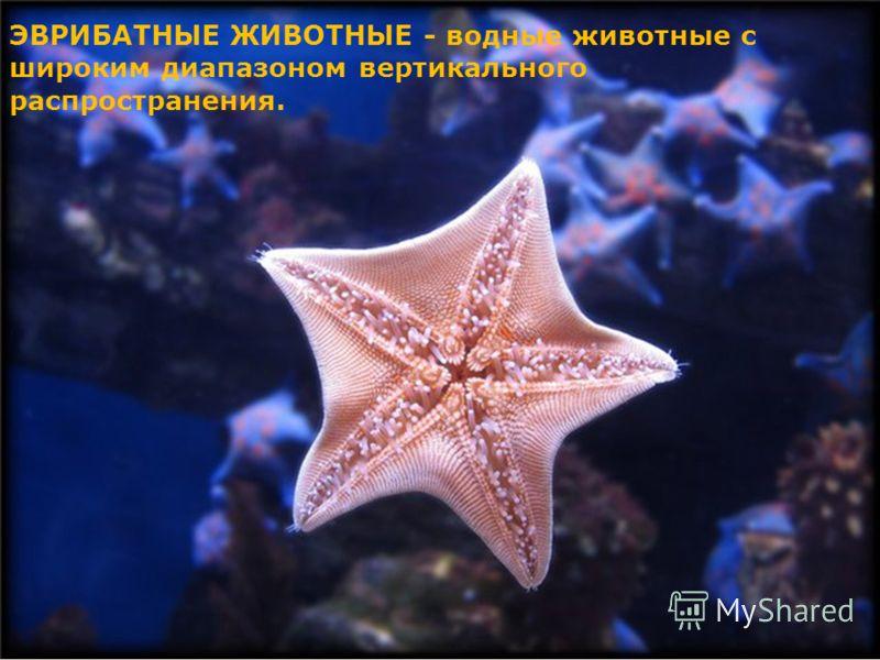 ЭВРИБАТНЫЕ ЖИВОТНЫЕ - водные животные с широким диапазоном вертикального распространения.