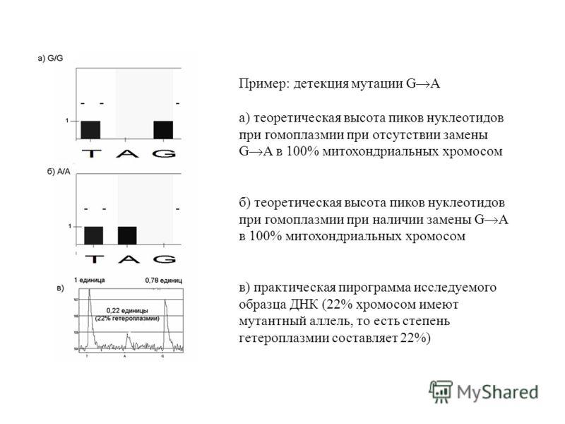 Пример: детекция мутации G A а) теоретическая высота пиков нуклеотидов при гомоплазмии при отсутствии замены G A в 100% митохондриальных хромосом б) теоретическая высота пиков нуклеотидов при гомоплазмии при наличии замены G A в 100% митохондриальных