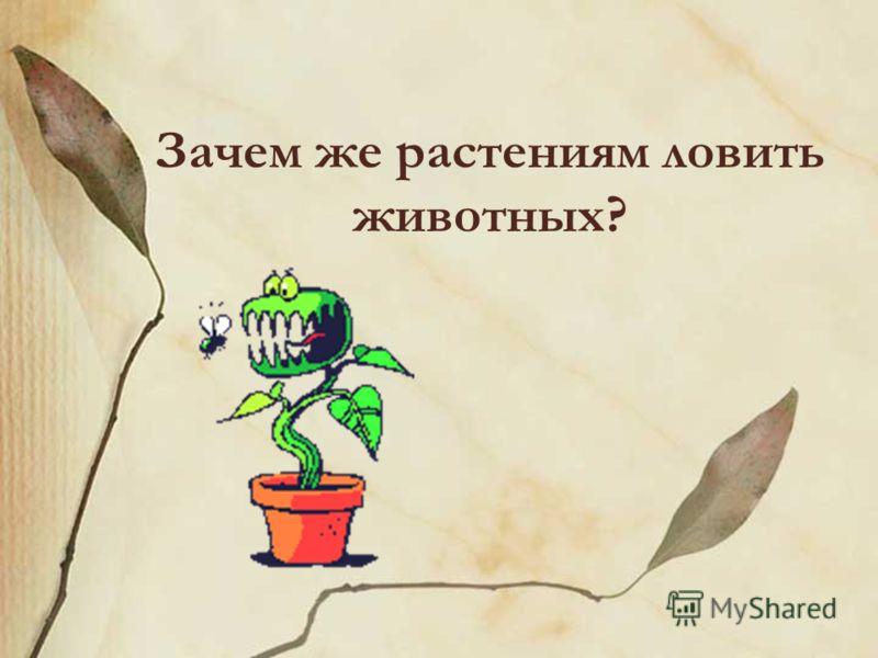 Зачем же растениям ловить животных?