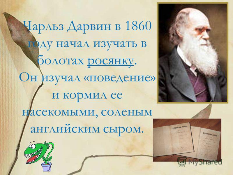 Чарльз Дарвин в 1860 году начал изучать в болотах росянку. Он изучал «поведение» и кормил ее насекомыми, соленым английским сыром.