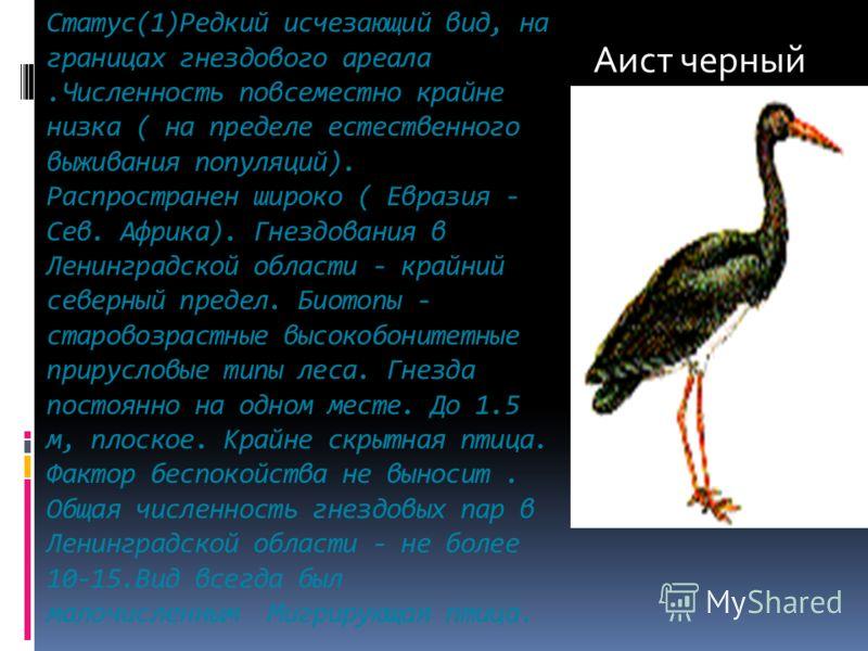 Статус(1)Редкий исчезающий вид, на границах гнездового ареала.Численность повсеместно крайне низка ( на пределе естественного выживания популяций). Распространен широко ( Евразия - Сев. Африка). Гнездования в Ленинградской области - крайний северный