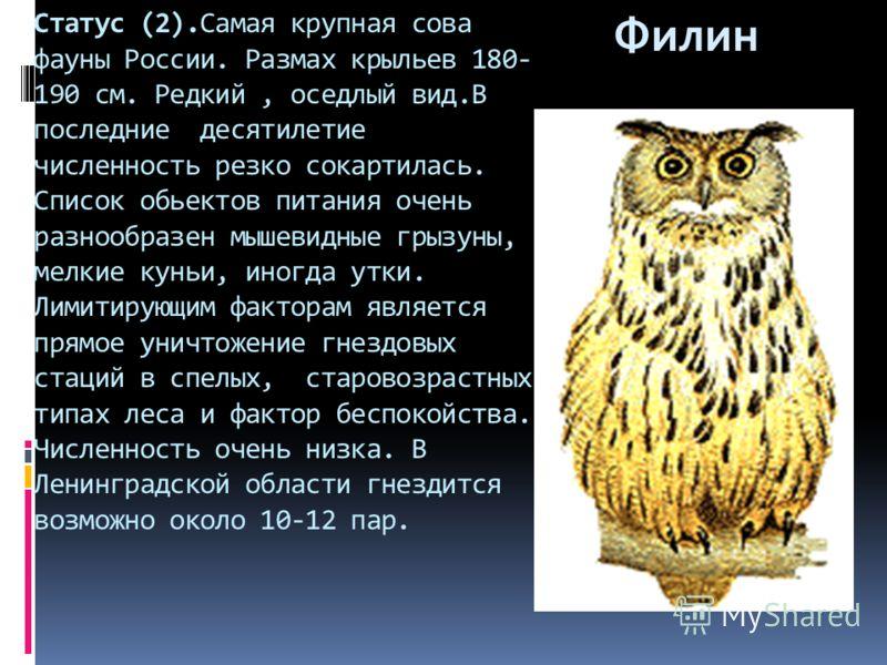 Статус (2).Самая крупная сова фауны России. Размах крыльев 180- 190 см. Редкий, оседлый вид.В последние десятилетие численность резко сокартилась. Список обьектов питания очень разнообразен мышевидные грызуны, мелкие куньи, иногда утки. Лимитирующим