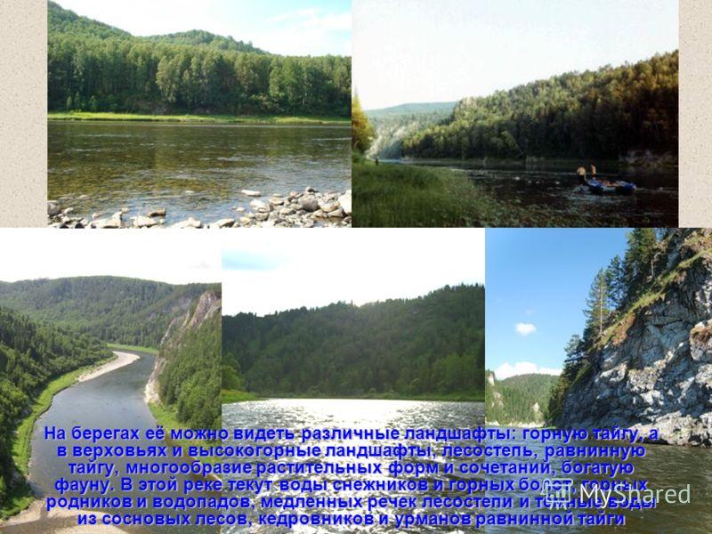 На берегах её можно видеть различные ландшафты: горную тайгу, а в верховьях и высокогорные ландшафты, лесостепь, равнинную тайгу, многообразие растительных форм и сочетаний, богатую фауну. В этой реке текут воды снежников и горных болот, горных родни