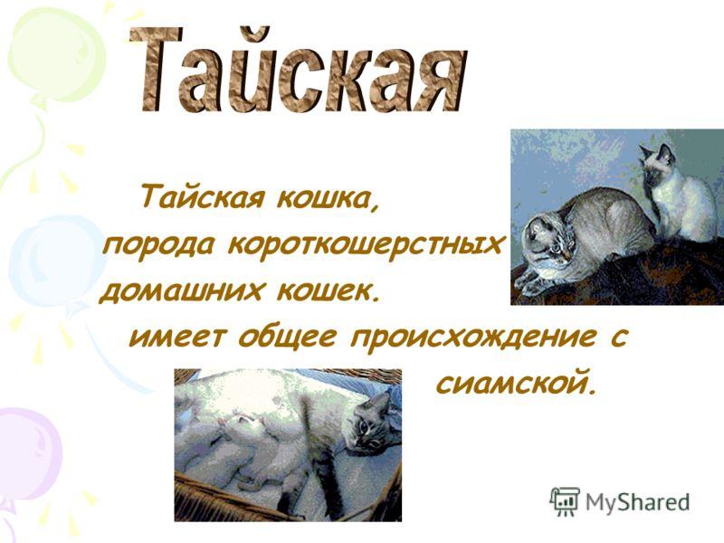 Сиамская кошка, порода короткошерстных домашних кошек, получила имя по старому названию Таиланда. Ценились они очень дорого и жили только во домашних кошек, получила имя по старому названию Таиланда. Ценились они очень дорого и жили только во дворцах