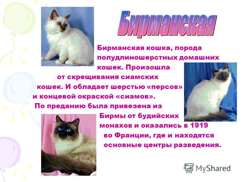 А биссинская кошка, порода короткошерстных домашних кошек. Предком её считается дикая африканская кошка, обитавшая на территории Абиссинии (ныне Эфиопия). В 1860-х годах британская военная экспедиция привезла эту кошку из Эфиопии в Великобританию, гд