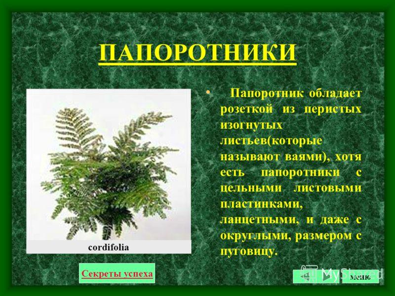ПЕЛАРГОНИЯ Растение, высотой примерно около 50 см, с округлыми крупными листьями, 7-9 см в диаметре, с зубчатым краем. Соцветие зонтик, на длинном цветоносе. Цветки около 5-6 см в диаметре, самых разных цветов - сиреневые, розовые, белые, лиловые и д