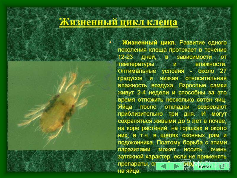 Однако комнатные растения поражаются также и рядом других видов клещей: Tetranychus turkestani (земляничный), Т. pacificus (тихоокеанский), T. urticae (обыкновенный), T. cinnabarinus (красный). Клещи - достаточно мелкие животные. Самые крупные экземп
