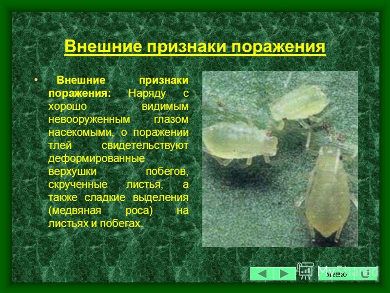 ТЛЯ Тля - малоподвижное насекомое размером от 1 до 5 мм, продолговато-яйцевидной формы, с мягкими наружными покровами. Окраска тела неодинакова у разных видов тли - от желто- зеленой до черной. Существует около 30 видов. Комнатные растения поражаются