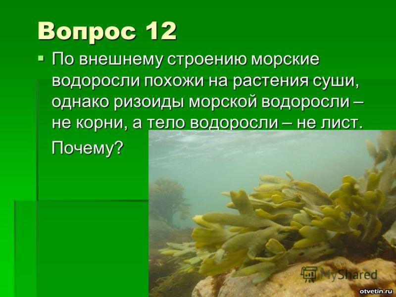 Вопрос 12 По внешнему строению морские водоросли похожи на растения суши, однако ризоиды морской водоросли – не корни, а тело водоросли – не лист. По внешнему строению морские водоросли похожи на растения суши, однако ризоиды морской водоросли – не к