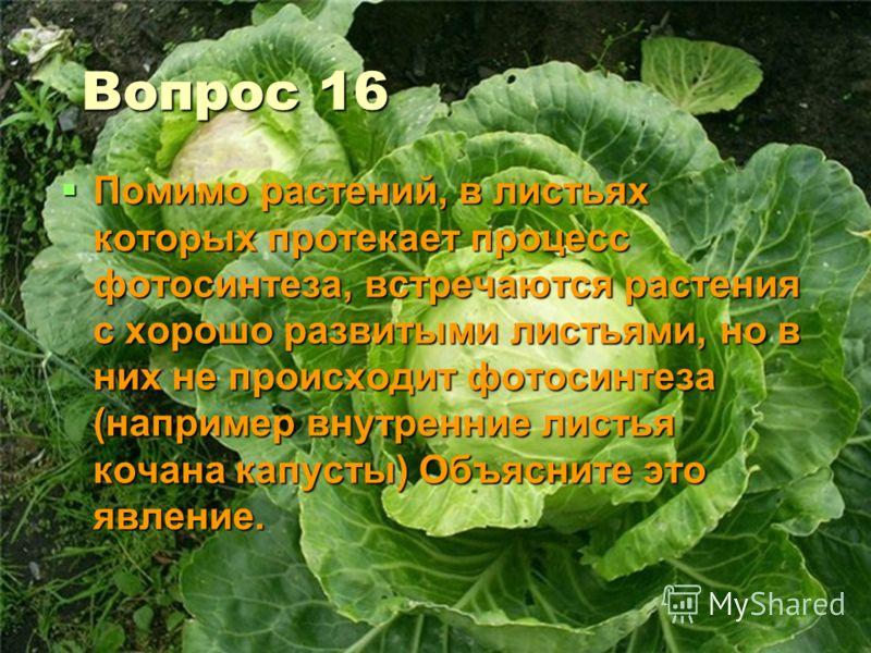 Вопрос 16 Помимо растений, в листьях которых протекает процесс фотосинтеза, встречаются растения с хорошо развитыми листьями, но в них не происходит фотосинтеза (например внутренние листья кочана капусты) Объясните это явление. Помимо растений, в лис