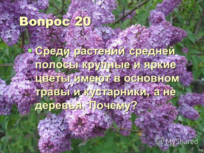Вопрос 20 Среди растений средней полосы крупные и яркие цветы имеют в основном травы и кустарники, а не деревья. Почему? Среди растений средней полосы крупные и яркие цветы имеют в основном травы и кустарники, а не деревья. Почему?