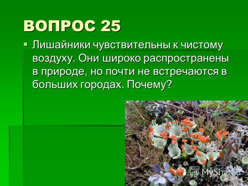 ВОПРОС 25 Лишайники чувствительны к чистому воздуху. Они широко распространены в природе, но почти не встречаются в больших городах. Почему? Лишайники чувствительны к чистому воздуху. Они широко распространены в природе, но почти не встречаются в бол
