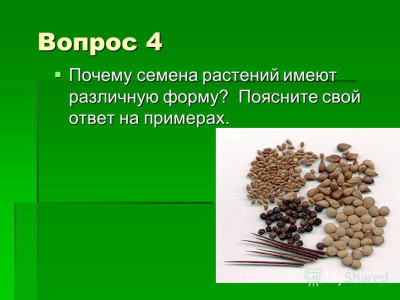 Вопрос 4 Почему семена растений имеют различную форму? Поясните свой ответ на примерах. Почему семена растений имеют различную форму? Поясните свой ответ на примерах.