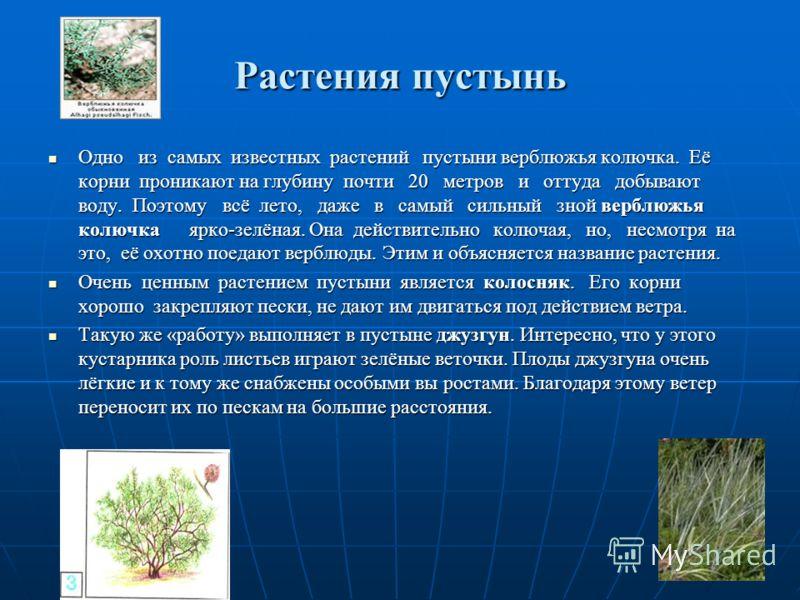 Зона пустынь В России пустыни занимают небольшую площадь по берегам Каспийского моря, к западу и к востоку от низовьев Волги. Гораздо обширнее полупустыни, которые находятся между степью и настоящей пустыней. Лето в пустыне очень жаркое. Поверхност