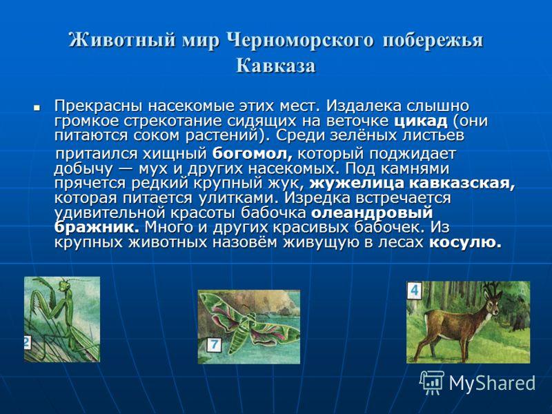Растения субтропиков. Почвы Черноморского побережья Кавказа плодородны, а растительность богата. В лесах на склонах гор растут широколиственные деревья дуб, бук, каштан настоящий. В парках и на городских улицах люди выращивают красивые растения, п