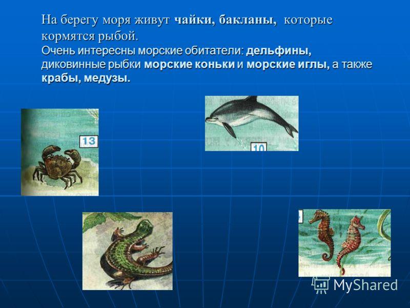Схема цепи питания для черноморского побережья кавказа фото 248