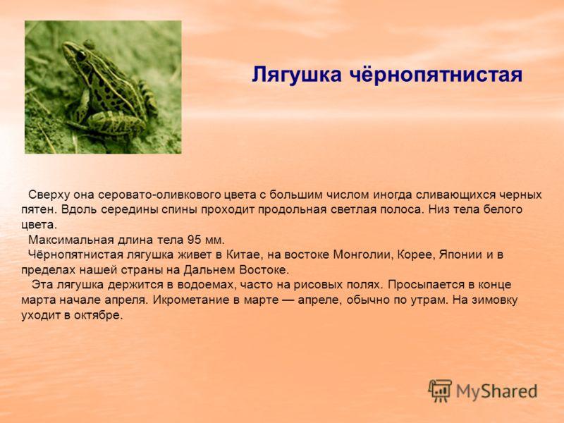 Лягушка чёрнопятнистая Сверху она серовато-оливкового цвета с большим числом иногда сливающихся черных пятен. Вдоль середины спины проходит продольная светлая полоса. Низ тела белого цвета. Максимальная длина тела 95 мм. Чёрнопятнистая лягушка живет