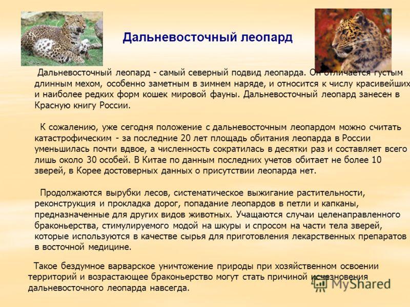 Дальневосточный леопард Дальневосточный леопард - самый северный подвид леопарда. Он отличается густым длинным мехом, особенно заметным в зимнем наряде, и относится к числу красивейших и наиболее редких форм кошек мировой фауны. Дальневосточный леопа