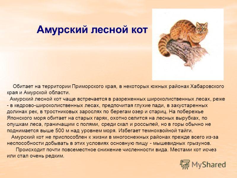 Амурский лесной кот Обитает на территории Приморского края, в некоторых южных районах Хабаровского края и Амурской области. Амурский лесной кот чаще встречается в разреженных широколиственных лесах, реже - в кедрово-широколиственных лесах, предпочита