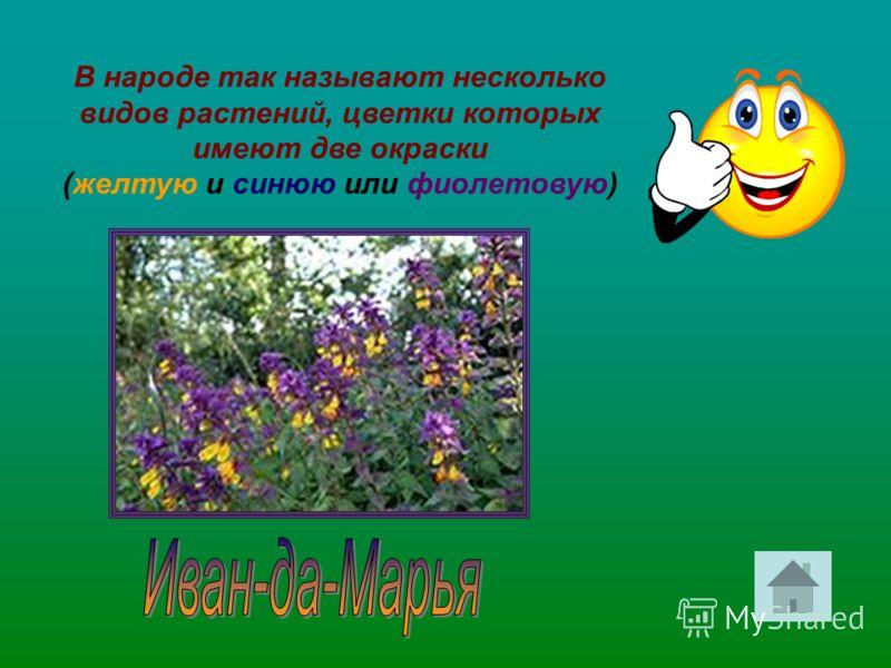 В народе так называют несколько видов растений, цветки которых имеют две окраски (желтую и синюю или фиолетовую)