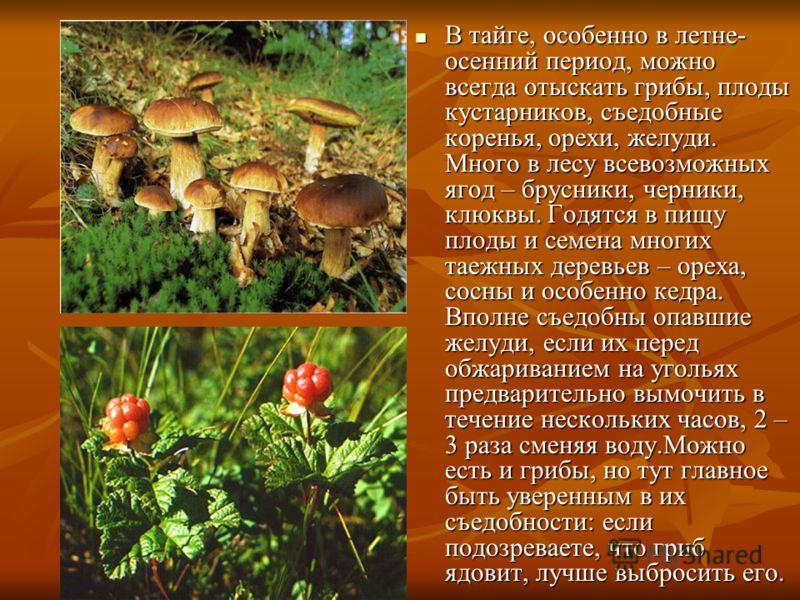 В тайге, особенно в летне- осенний период, можно всегда отыскать грибы, плоды кустарников, съедобные коренья, орехи, желуди. Много в лесу всевозможных ягод – брусники, черники, клюквы. Годятся в пищу плоды и семена многих таежных деревьев – ореха, со
