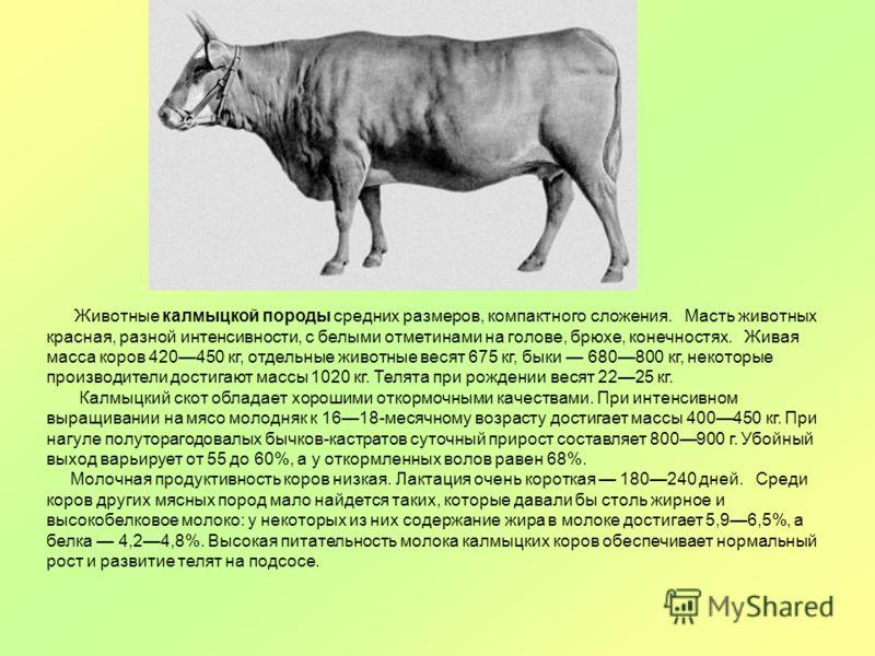 Животные калмыцкой породы средних размеров, компактного сложения. Масть животных красная, разной интенсивности, с белыми отметинами на голове, брюхе, конечностях. Живая масса коров 420450 кг, отдельные животные весят 675 кг, быки 680800 кг, некоторые