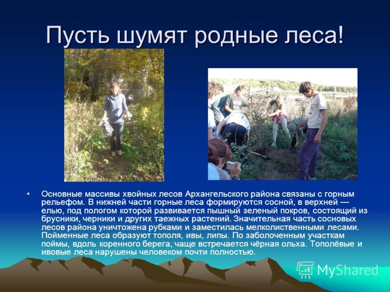 Пусть шумят родные леса! Основные массивы хвойных лесов Архангельского района связаны с горным рельефом. В нижней части горные леса формируются сосной, в верхней елью, под пологом которой развивается пышный зеленый покров, состоящий из брусники, черн