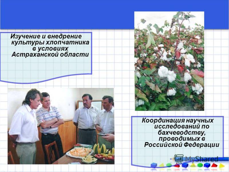 Изучение и внедрение культуры хлопчатника в условиях Астраханской области Координация научных исследований по бахчеводству, проводимых в Российской Федерации
