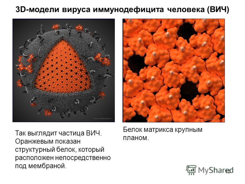 10 3D-модели вируса иммунодефицита человека (ВИЧ) Так выглядит частица ВИЧ. Оранжевым показан структурный белок, который расположен непосредственно под мембраной. Белок матрикса крупным планом.