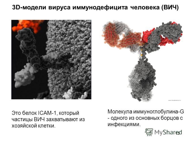 13 Это белок ICAM-1, который частицы ВИЧ захватывают из хозяйской клетки. Молекула иммуноглобулина-G - одного из основных борцов с инфекциями. 3D-модели вируса иммунодефицита человека (ВИЧ)