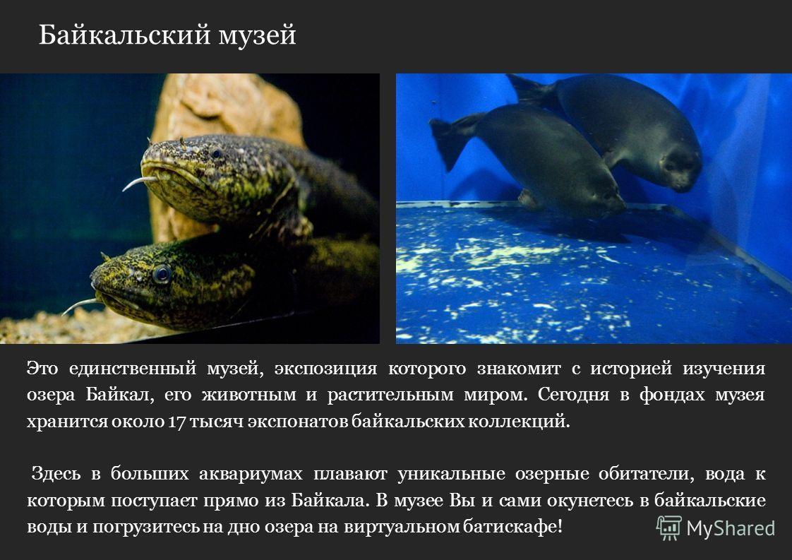 Байкальский музей Сегодня вы будете удивлены мастерству Русских зодчих, которые построили знаменитую Кругобайкальскую железную дорогу. Это единственный музей, экспозиция которого знакомит с историей изучения озера Байкал, его животным и растительным